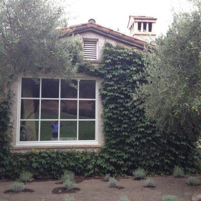 St Helena Residence Glass Window Leaves